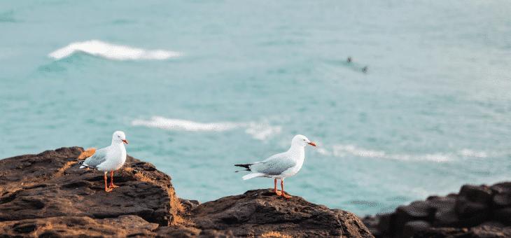 8 coses que pots fer per tenir cura dels nostres oceans